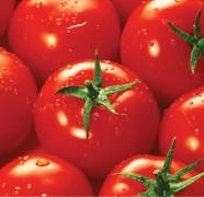 Kaip sodinti pomidorus