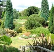 Kaip sodinti spygliuočius medžius