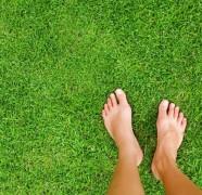 Kaip efektyviai išnaikinti piktžoles